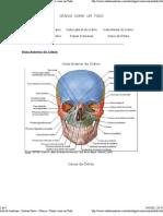 Aula de Anatomia - CRÂNIO  COMO  UM  TODO