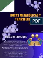 RUTAS METABÓLICAS Y TRANSFERENCIA DE ENERGÍA