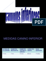 caninosinferiores-090512122840-phpapp01