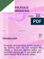 Foliculo Pilosebaceo