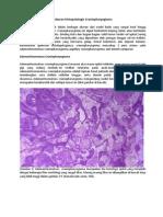 Gambaran Histopatologis Craniopharyngioma