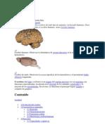 Cerebro Repaso Quizz