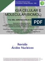 Revisao Acidos Nucleicos AULA 1