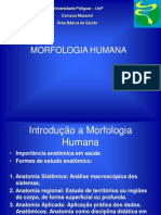 AULA 01 -      APRESENTAÇÃO DA MORFOLOGIA