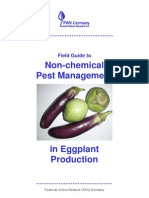 Field Guide Eggplant