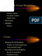 20090114-1 Lymph Node Intro (1)