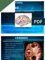 40161290 Cerebro y Areas de Brodman