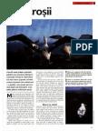 Albatrosii