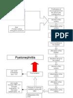 PATHOPHYSIOLOGY-pyelonephritis