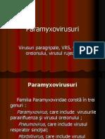 PARAMYXOVIRUSURIi