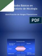 métodos básicos en el laboratorio de micologia