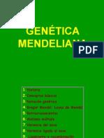 genetica_mendeliana_dihibridismo