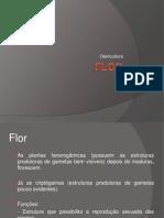 Aula - Flor