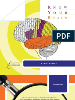 Brain Basics Know Your Brain
