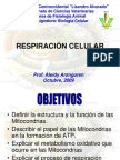 MITOCONDRIAclase