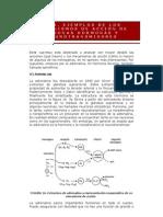 Ejemplos de Los Mecanismos de Accion de Algunas Hormonas y Neurotransmisores