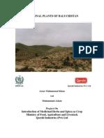 Medicinal Plants of Balochistan