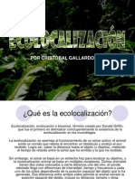 Ecolocalización (Echolocation)