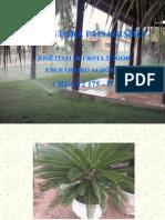 Cópia de plantas para paisagismo