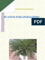 Planta monoica unisexual people