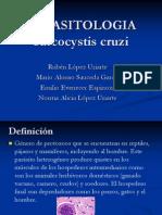Sarcocystis parasito