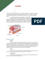 A Célula Miocárdica