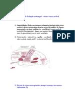 Controledafunçãomotorapelocórtexetroncocerebral
