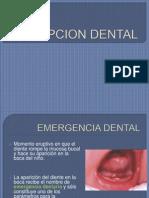 Erupcion Dental