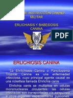 BABESIOSIS Y ERLICHIOSIS