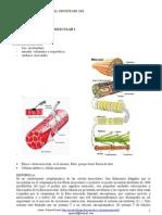 (Microsoft Word - 9-10-08 Estr. y Función muscular
