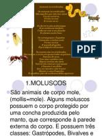 invertebrados-1205368067600323-2