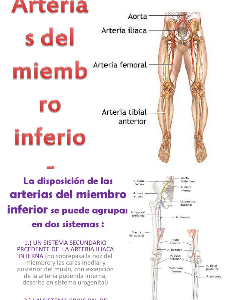 Arterias Del Miembro Inferior