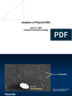 CY2007 Plasmid Isolation