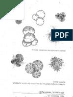 representação grafica de plantas-paisagismo