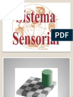 SISTEMA SENSORIAL - AULA 5