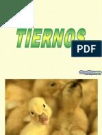 Animales_Tiernos