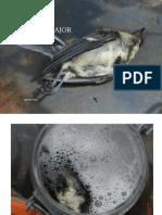 Parus Major, decomposition of a great tit