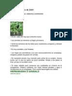 13 plantas aromaticas