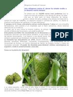 Planta_milagrosa_contra_el_cáncer