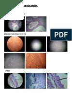 Vistas de Embriologia
