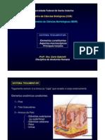 Anatomia Sistema Tegumentar
