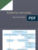 sistemanervioso1