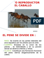 Aparato Re Product Or Del Caballo