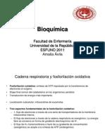 14 -Cadena Respiratoria y Fosforilacion Oxidativa Clase 14