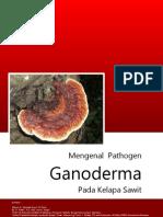 Mengenal Pathogen Ganoderma Pada Kelapa Sawit