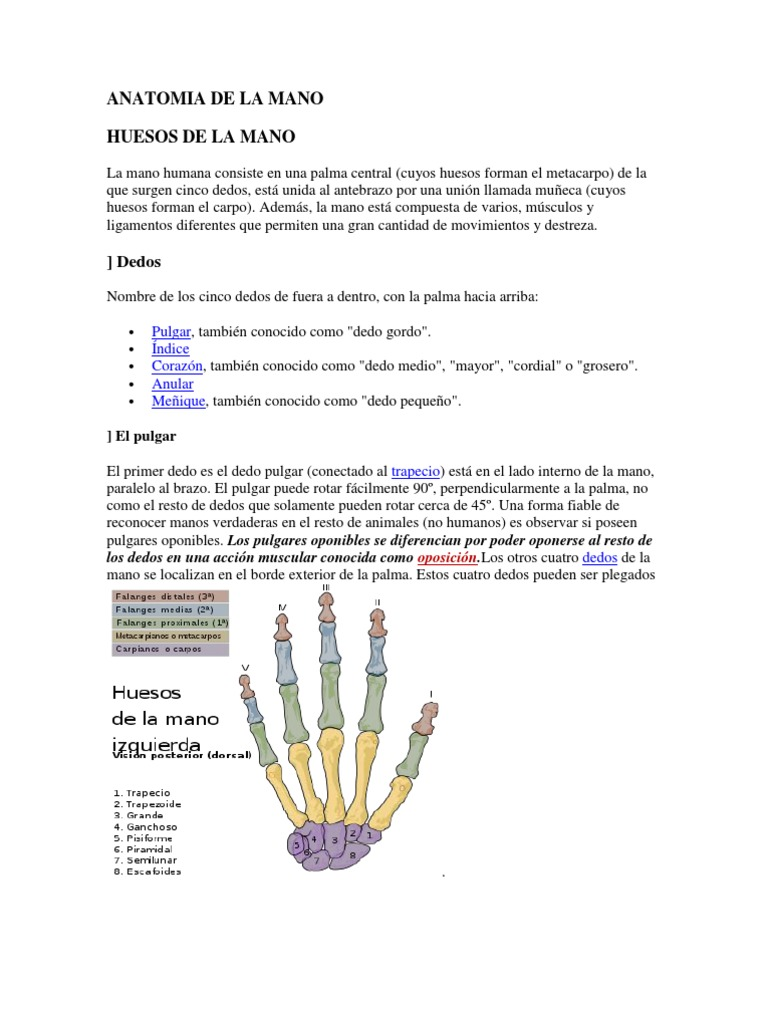 Anatomia de La Mano
