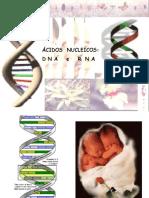 Ácidos nucleicos DNA e RNA