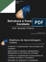 Aula estrutura e função do cerebelo