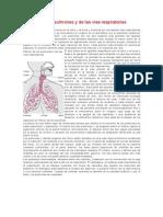 Biología de Los Pulmones y de Las vías Respiratorias