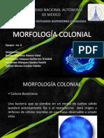 morfologi..